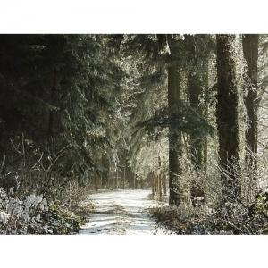 Wald im Raureif