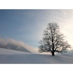 Baum in Schneelandschaft