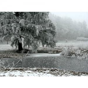 Riedlandschaft im Winter