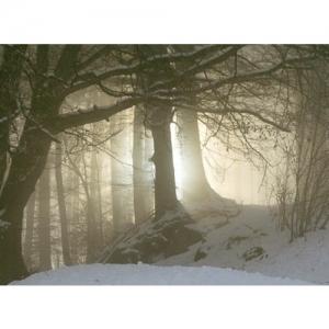 Winterwald im Morgenlicht