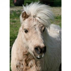 Pony - 0675