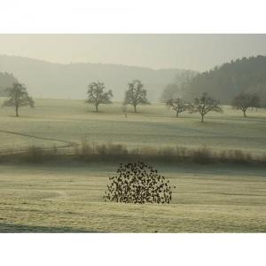 Vogelschwarm - 1127