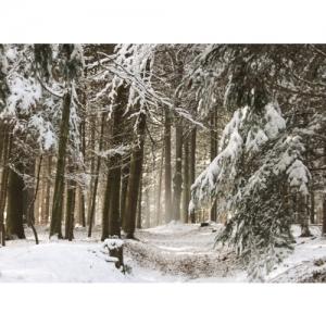 Winterwald - 0596