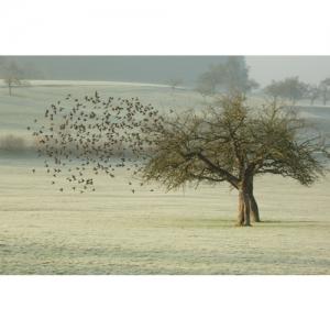 1L 0456 Vogelschwarm 45x30