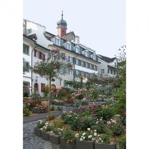 L 1764 Rosenstadt Bischofszell  60x40