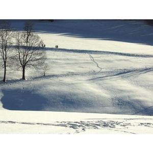 Spuren im Schnee - 0555