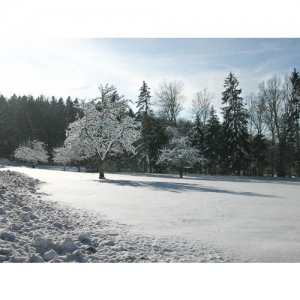 Schneelandschaft - 0564